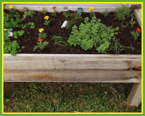 herb garden bed