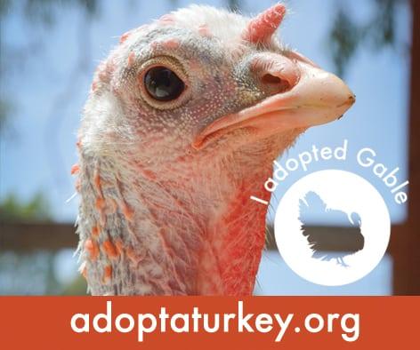 Adopt a Turkey from Farm Sanctuary