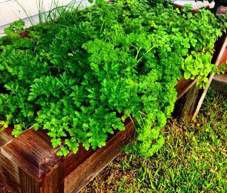 How to Harvest Herbs  https://www.vegetarianzen.com