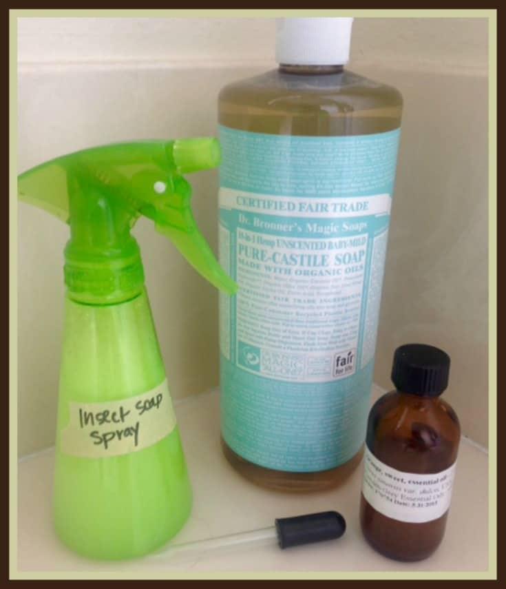 DIY Insecticidal Soap Ingredients  http://www.vegetarianzen.com